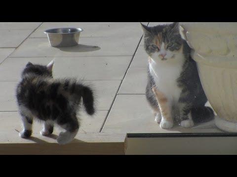 Un Chaton Veut Marquer Son Territoire, Kitten Wants To Mark His Territory