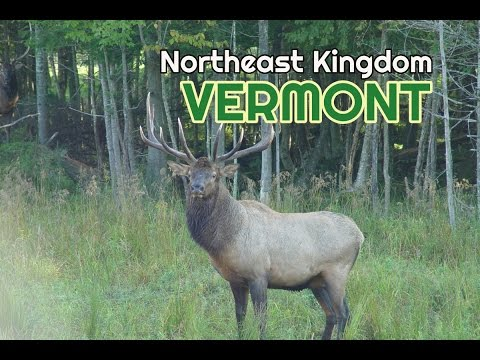Vermont Northeast Kingdom Wildlife Farm with Elk, Deer, Moose and Buffalo