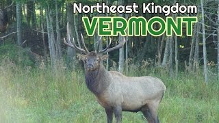 A Northeast Kingdom Vermont Wildlife Farm with Elk, Deer, Moose and Buffalo