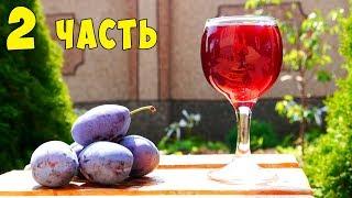ВИНО ИЗ СЛИВЫ !!! Сливовое вино ПРОСТОЙ РЕЦЕПТ Часть 2