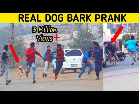 Real Dog Bark Prank (gone wrong) | Prank in Pakistan | Smarties TV
