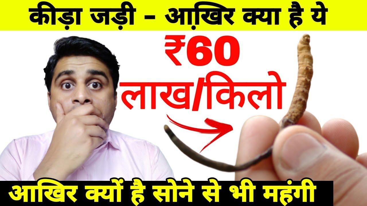 कीड़ा जड़ी – ₹ 60 लाख/किलो आखि़र क्या है इसके पीछे का कारण.. Boost your Stamina and Power SuperFast