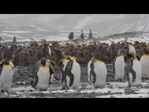 Falkland Islands, South Georgia & Antarctic Peninsula, November 2015