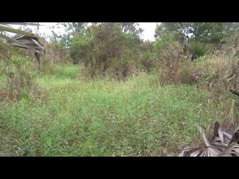 Florida Panther encounter