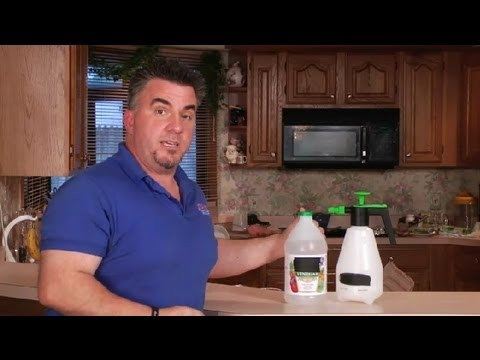 How to Remove a Dog Urine Smell From a Carpet Naturally : Carpet Care & Cleaning