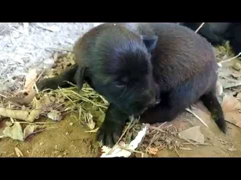 new stray puppies