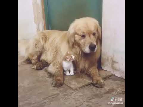 Dog Series: When a dog is rejected by a cat