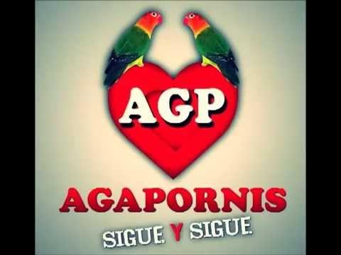 Agapornis-Don't speak