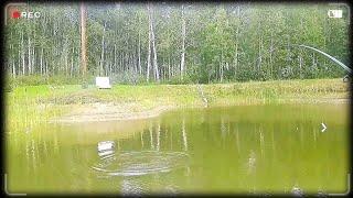Замечательная рыбалка на карпа