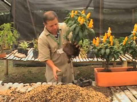 Curso de jardineria doovi for Curso de jardineria