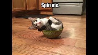 Spin and Dizzy Cat Videos 2017
