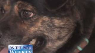 Buddy Tucker Story, If you love animals please share this touching story
