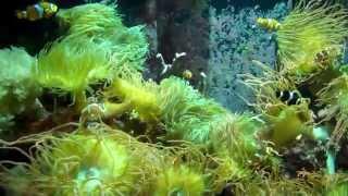 Mystic Aquarium Tour in Mystic, CT 35 minute video 2012