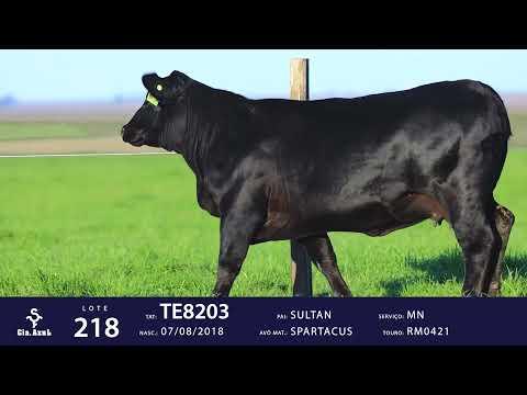 LOTE 218 - TE8203
