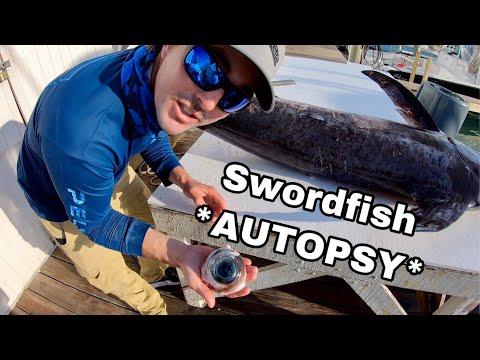 Swordfish AUTOPSY - Inside A Swordfish Body