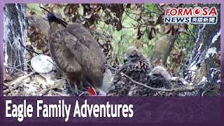 Eagle family's adventures create delight for bird lovers in Pingtung