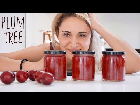 Plum Jam | When You Have More Fruit You Can Use