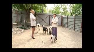 Пропала беременная  гренландская лайка