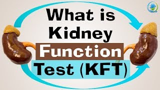 What is Kidney Function Test (KFT) | Kidney Treatment in India - English