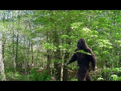 Bigfoot exists dna evidence proves bigfoot or sasquatch is real bigfoot exists dna evidence proves bigfoot or sasquatch is real sciox Images