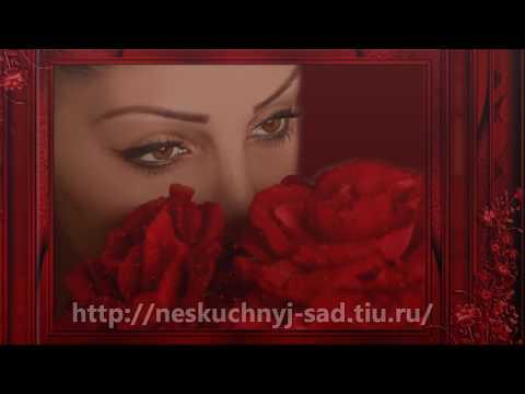 """Розы """"Фрейндшип"""", Новоуральск """"Нескучный сад"""".из YouTube · С высокой четкостью · Длительность: 1 мин2 с  · Просмотров: 503 · отправлено: 07.07.2012 · кем отправлено: нескучный сад новоуральск"""