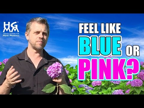 Feeling Blue Or Pink How To Change The Color Of You