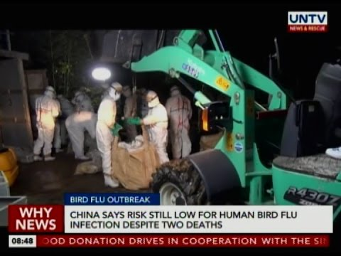 China says risk still low for human bird flu infection despite two deaths
