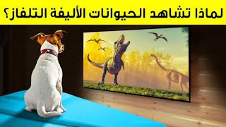 هل تشاهد الكلاب والقطط التلفاز حقًا؟