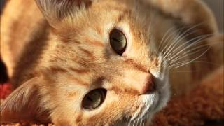 Александра Ворожбитова - Кошка, которая гуляет сама по себе