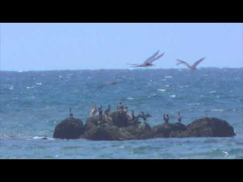 Royalty Free Stock Footage: Seagulls on Rocks just off of Santa Monica Pier