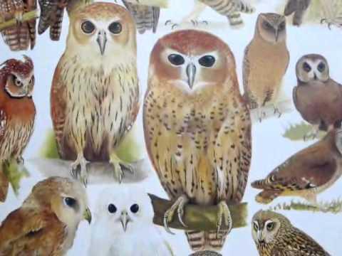 Birds of Africa Volume 3 | Stella & Rose's Books Slideshow