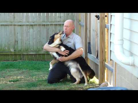 The Homecoming - English Shepherd Jack and his Dad