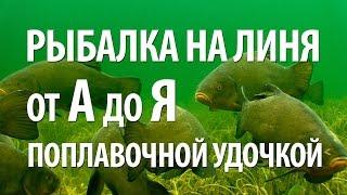 Рыба линь на поплавочную удочку - особенности рыбалки на линя(Рыболовный интернет-магазин: http://ali.pub/bctei В видео, как ловится рыба линь на поплавочную удочку. Как результа..., 2015-10-25T10:59:04.000Z)