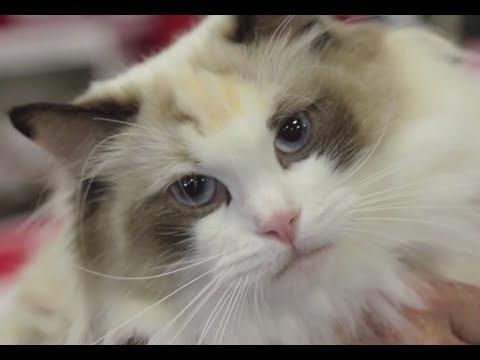 getting rid of fleas on baby kittens