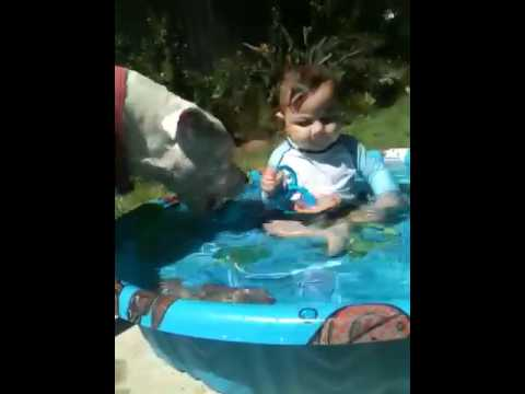 Swim fun with Zen and our pitbull Patch.