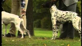 German Shorthaired Pointer - Akc Dog Breed Series
