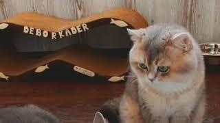 Кошка хочет кота, а он ее нет!