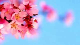 オーボエ 日本の名曲より 春よ来いを演奏しました(*'∀'*) 下手ですがと...