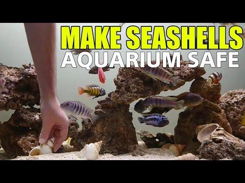 How To Clean Seashells For Aquarium SAFE Shells