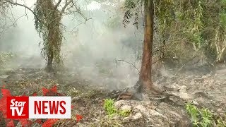 Four Malaysian firms behind fires at plantations, claims Indonesia