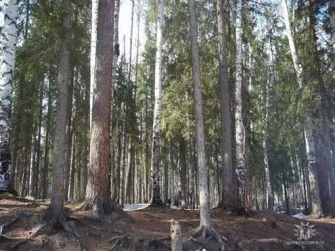 Алтайский край Википедия