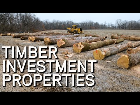 Timber Investment Properties | What To Look For