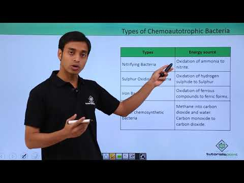Kingdom Monera Nutrition - Chemoautotrophic Bacteria
