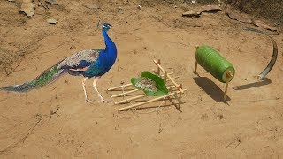 Human Make Quick Easy Peacock Trap Using Winter Melon & Cutter ( That work 100% ) Easy Bird Trap