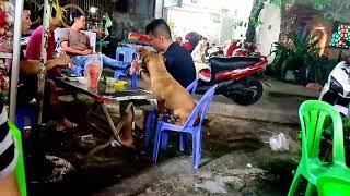 Chuyện Lạ,Chó Ngồi Nhậu Chung Với Chủ.😁😁🐶🐕