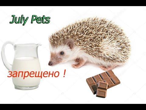 Запрещенные продукты для ежа! Что нельзя давать ежам! Совместное видео с каналом Pets TV