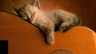 PET THERAPY ♣ Sleep Music for Dogs and Cats - Soothing Music w/ Binaural Beats - Anxiety Relief