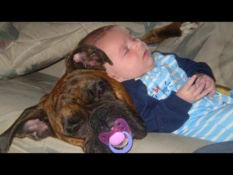 Babies Sleeping With Dogs Compilation