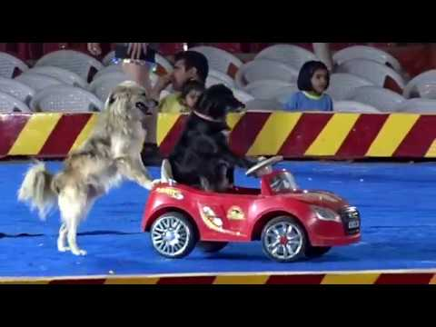 ASIAD CIRCUS [DOG SHOW CAR] AT DWARKA, SECTOR 11,NEW DELHI AS ON (23-11-2018)