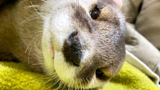 Why Aty is having trouble sleeping [Otter life Day 473]